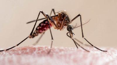 O mosquito da Dengue anda fazendo estragos mas não somente nas regiões que tiveram barragens rompidas