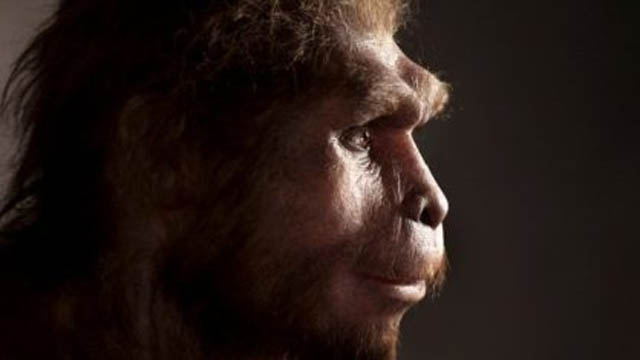 Na pesquisa ficou demonstrado que o Homo Sapiens desenvolveu sua defesa e por isso não sofreu o processo de extinção