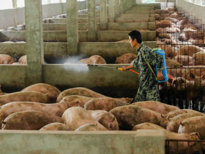 Já há novas cepas do vírus circulando entre os porcos da China (Imagem: Reuters/Stringer)